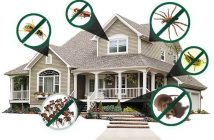 Pest-Proof your Home in winter & keep Rodents Away